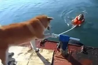 dog is guiding a man to swim