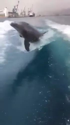 Dolphins swim by boat cruises - Video & GIFs | friendly dolphin,sea travel,tourist boat