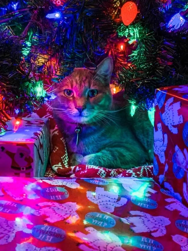 The best gift under the Christmas tree