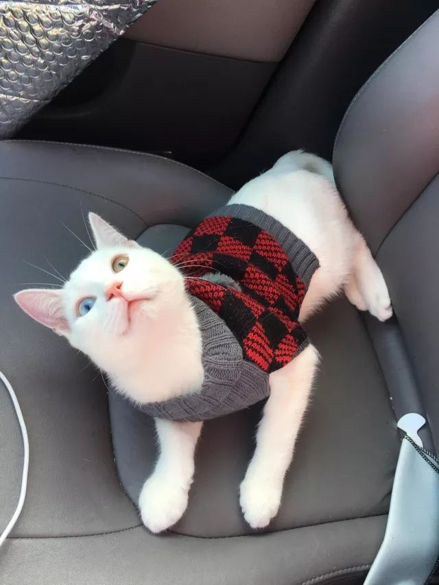 I'm single and decided to celebrate the holidays by bringing this guy home today! Merry Christmas! They put him in a Christmas adoption sweater.