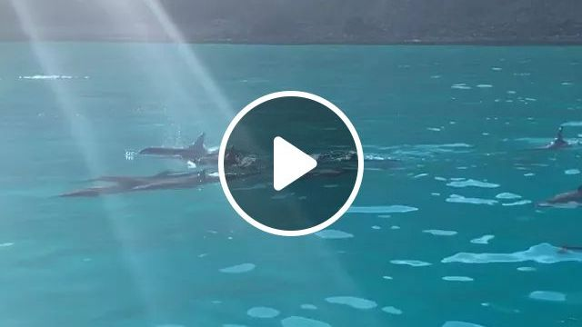 America travel, Saw dolphins for the first time ever on a raft tour in Kauai!,Hawaii, reddit, travel, saw_dolphins_for_the_first_time_ever_on_a_raft