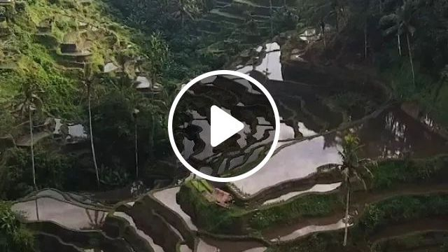 Indonesia Travel, Reflections On Tegalalang Rice Fields In Bali - Video & GIFs | reddit, travel, reflections_on_tegalalang_rice_fields_in_bali