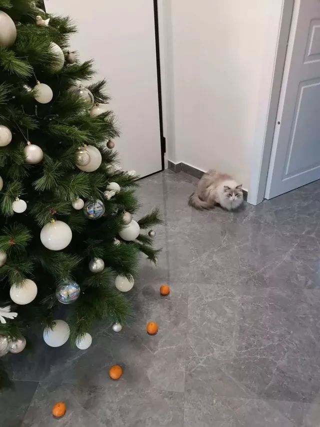Quot;My cat is afraid of tangerines, so i created a force field to protect the Christmas tree ...quot;