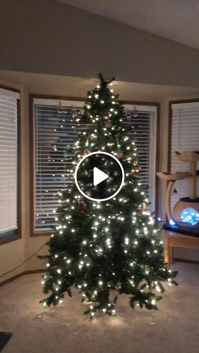 Christmas Cat Approves Of Decor - Video & GIFs   reddit, cats, christmas_cat_approves_of_decor