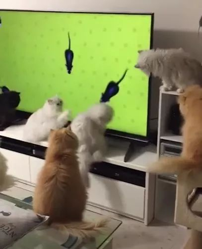 Entertainment for cats with TV