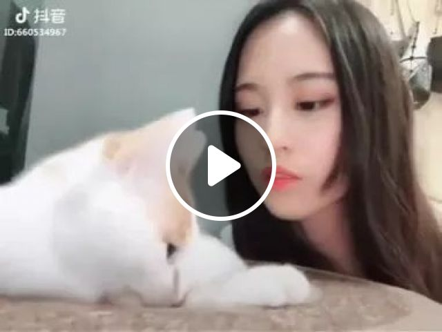 White Cat Is Very Beautiful - Video & GIFs | cats, adorable, pet, animal, white cat