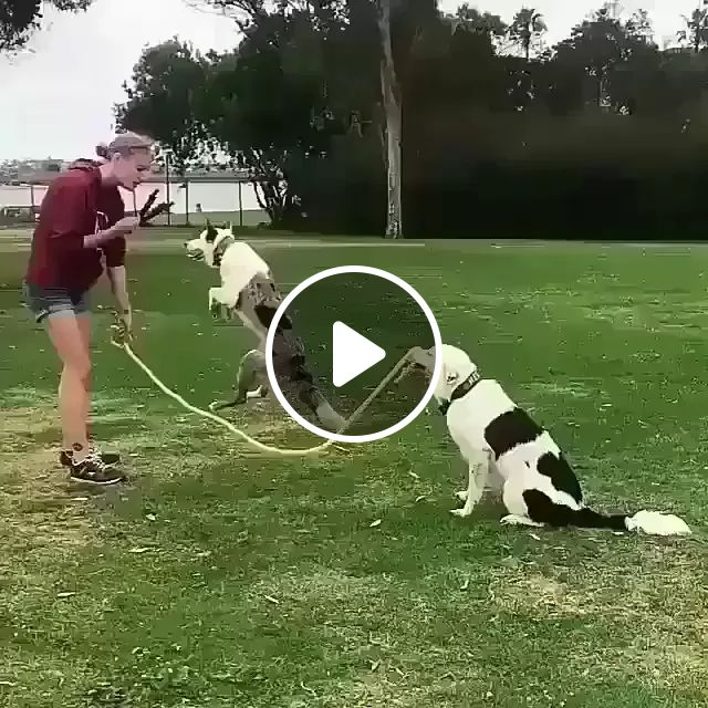 Talented Dog Jumping Rop - Video & GIFs   dogs, adorable, animal, pets, talents, jumping rope