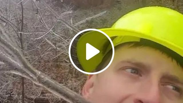 Worker Eat Snow Ice On Tree Branches - Video & GIFs   winter, workers, safety helmets, eating, ice, on tree branches