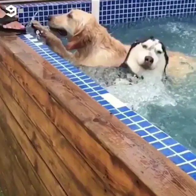 adorable dog is practicing swimming in pool