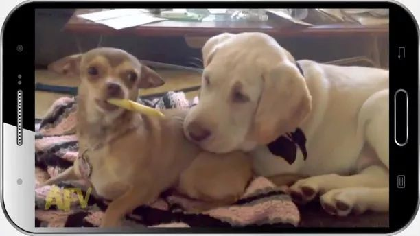 Two dogs are eating very lovely - Video & GIFs | Smart dogs, friendly animals, pet food