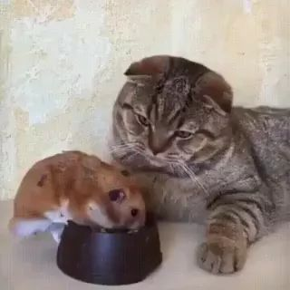 cat cedes food to mouse