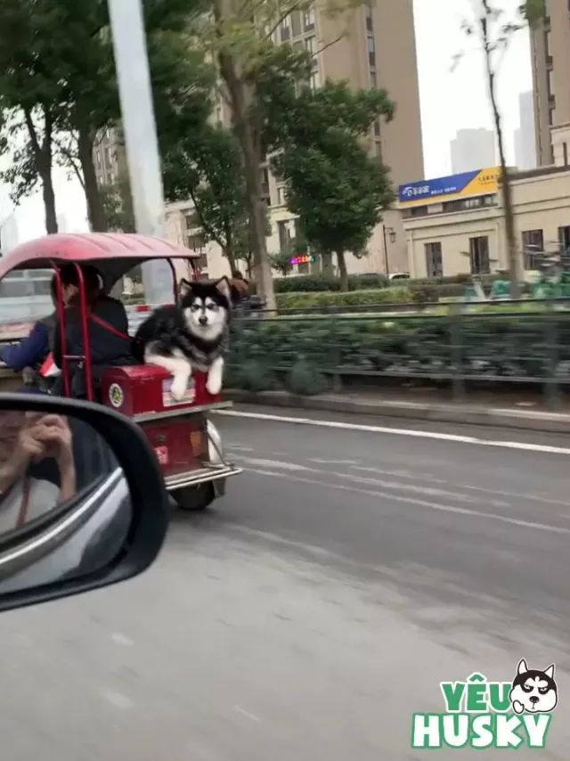 on the road, dog is sitting on a tricycle