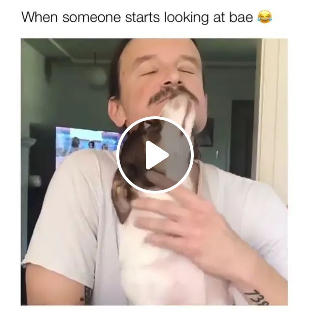 When Someone Starts Looking At Bae - Video & GIFs | Cute men, male fashion clothes, smart dogs, cute animals
