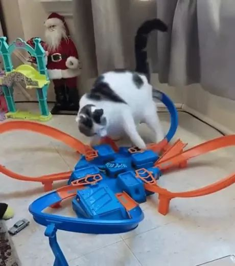 Cat loves playing plastic toys in living room