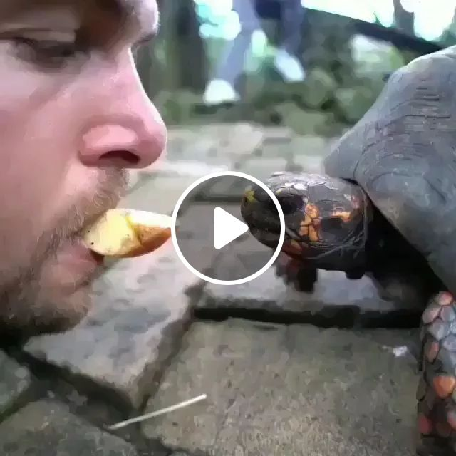 We Eat Together, Friendly men, delicious food, smart turtles, friendly animals