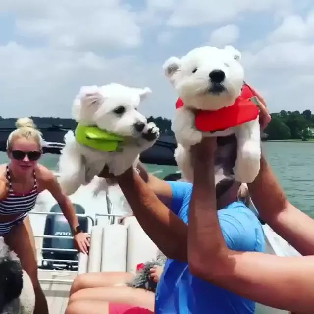 on the boat travel dogs are very happy