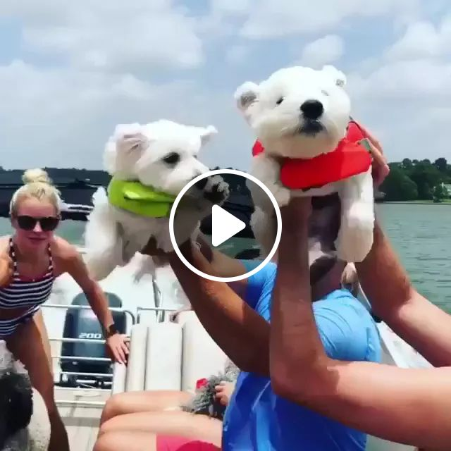 on the boat travel dogs are very happy, luxury boats, American travel, tourists, dogs, very happy