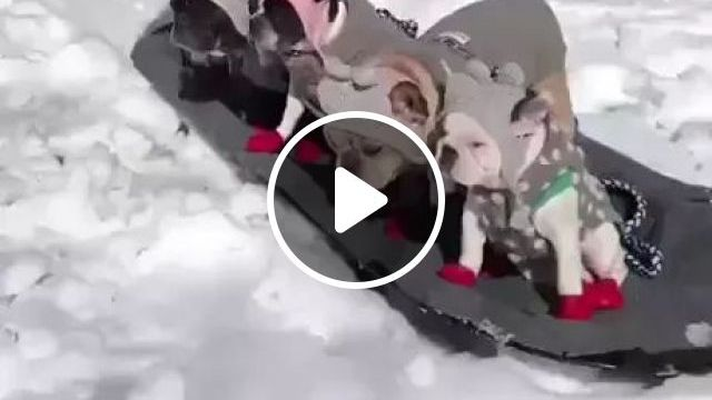 Winter, Puppies Are Moved On Wooden Board - Video & GIFs   winter, puppies, wooden boards, pet care, pet clothes, winter coat