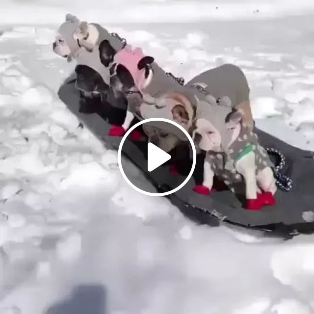 Winter, puppies are moved on wooden board