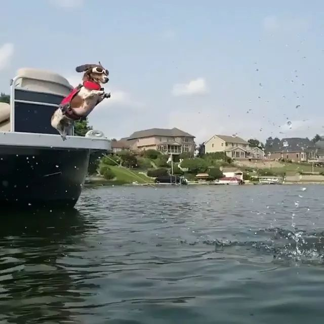 dog jumped from tourist boat into water