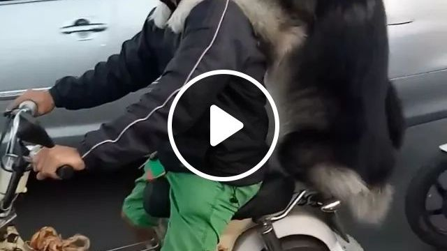 On The Street, With A Helmet Fitted With A Camera, Men And Dog Ride A Motorbike Together On A Trip - Video & GIFs | streets, luxury cars, tourists, helmets fitted with cameras, men, dogs, motorbikes, together on a trip, luxury vehicles