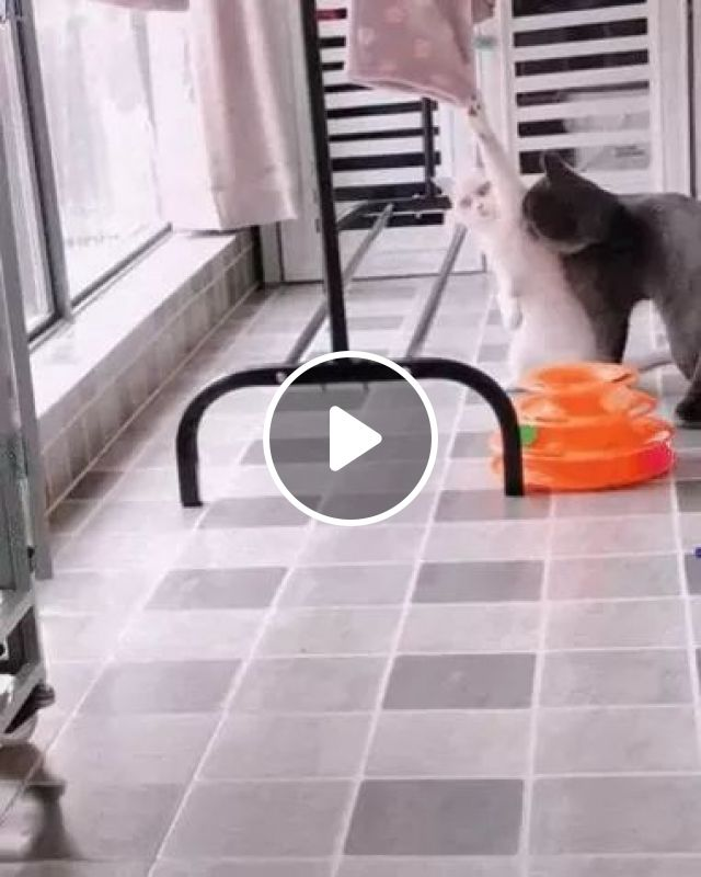 Black Cat Helped White Cat Take Clothes From Clothesline - Video & GIFs | Black cat, white cat, animals, pets, clothesline