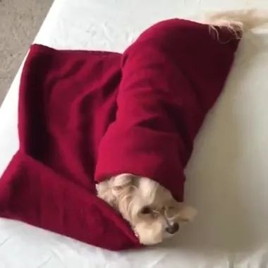 Puppy on a luxury bed