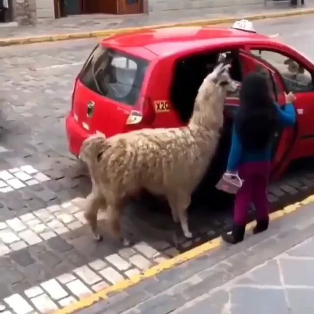 kids and pet get on a taxi together