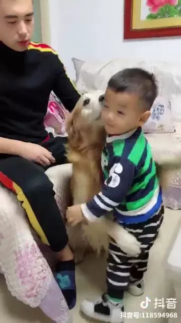 Smart dog protects baby in living room