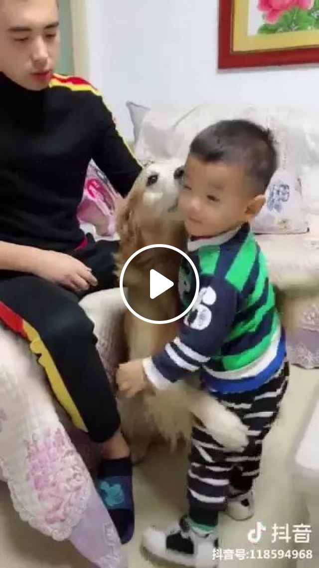 Smart Dog Protects Baby In Living Room - Video & GIFs | dog, smart, friendly, guard, baby, living room, high-class sofa
