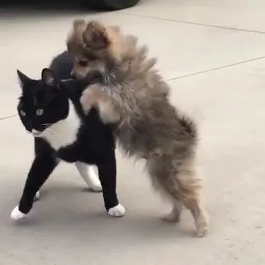 on the street, Puppy disturbs black cat and results