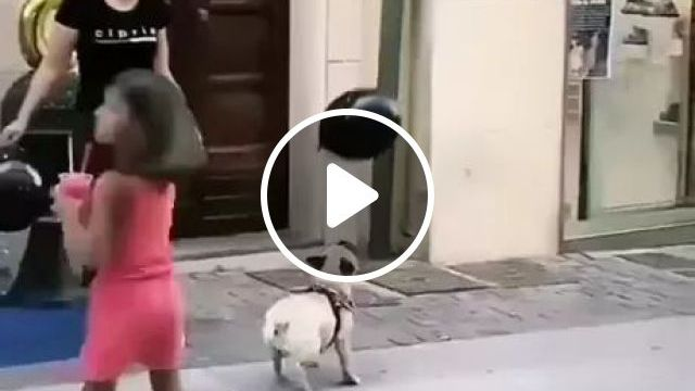 dog plays with bubble in front of store, Dog, adorable, animals, pets, bubbles, clothes shop, phone shop