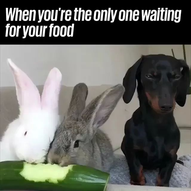 Two rabbits are eating cucumber, maybe dog is waiting for two rabbits to finish eating