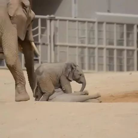 elephants are playing in sand