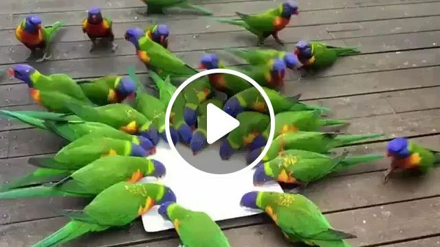 Parrots Are Happy To Eat - Video & GIFs | Smart birds, green parrots, feed animals, cute animals