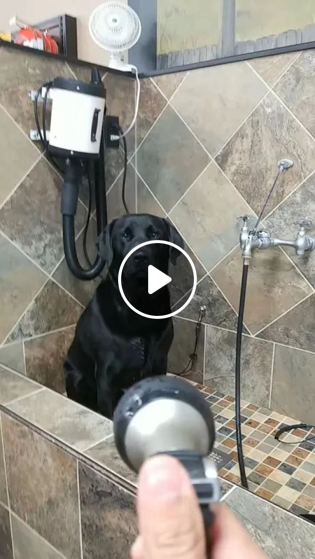 Excited dog in luxurious bathroom, dogs, animals, pets, excitement, luxurious bathrooms