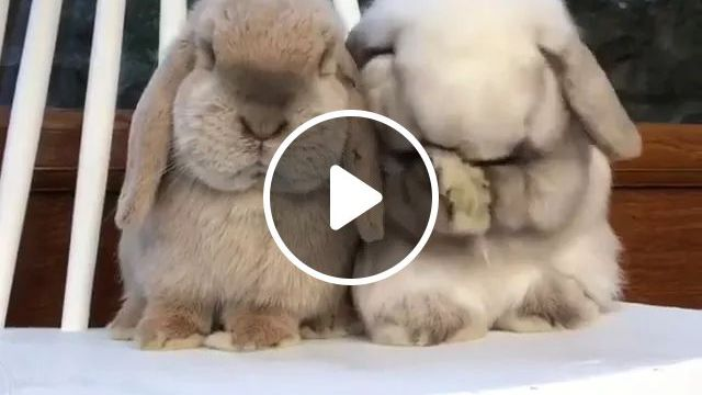 We Are Friends - Video & GIFs   animal, friend, frienly, rabbit, adorable