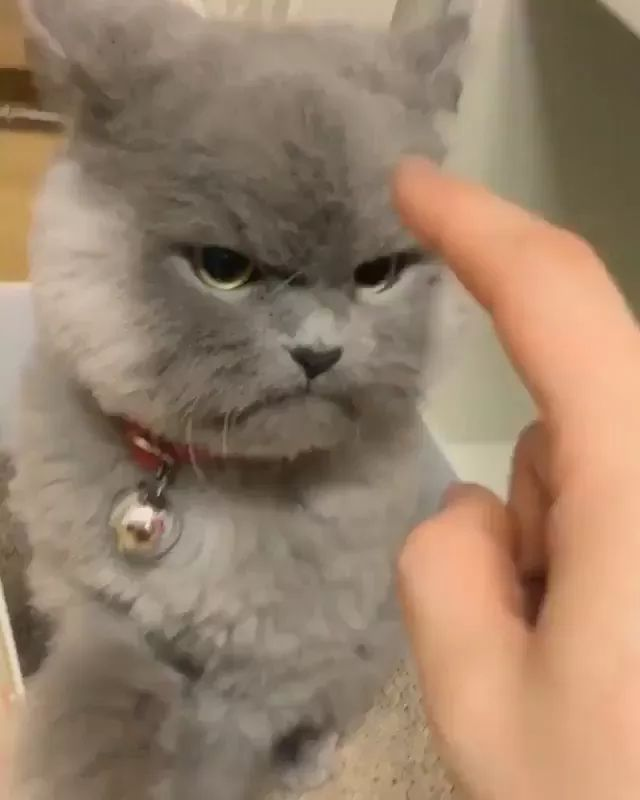 I'm cat when I don't wanna be affectionate