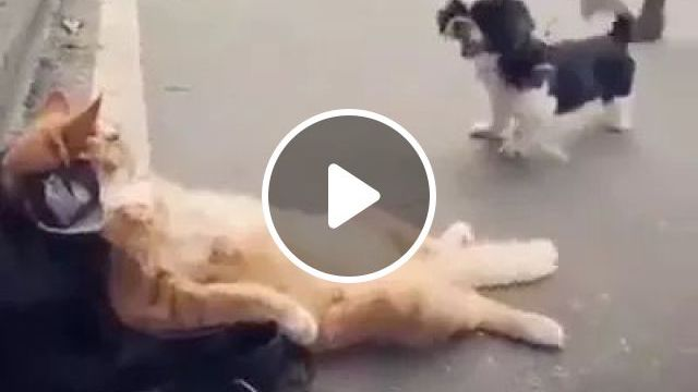 Cat Do Not Care When Puppies Approach And Bark - Video & GIFs | Cat, cool, adorable, don't care, puppies, dog leash, pet accessories, close-up, barking, street