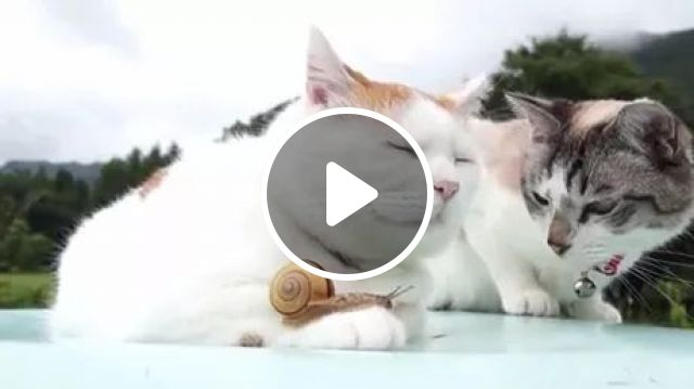 Carl, You've Got Something On Your Paw - Video & GIFs | cat, sun, sleep, adorable