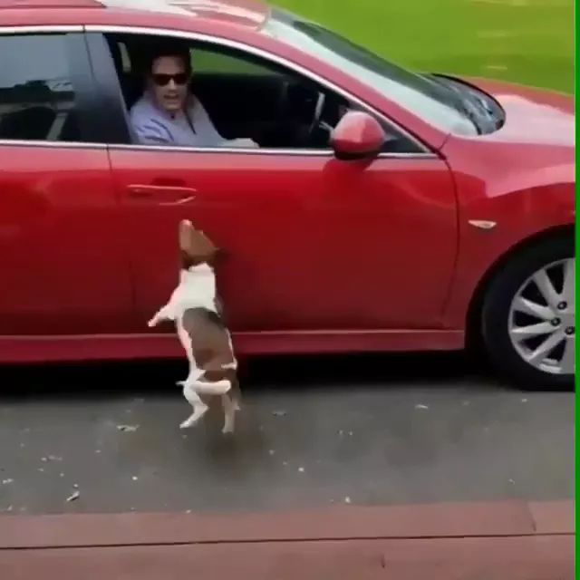 dog really doesn't want to stay at home, just wants to get in car with him - Video & GIFs | dog, really, not wanted, at home, on the car, luxury car, man, sunglasses, fashion clothes, luxury vehicle