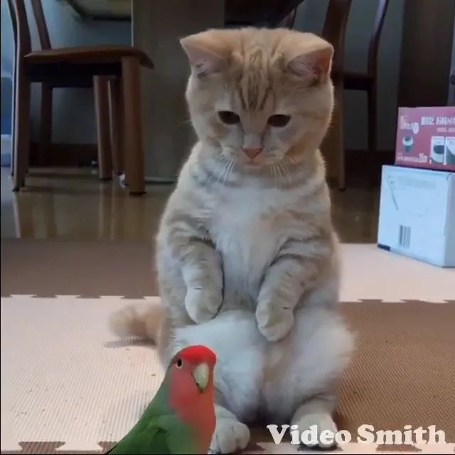 Cat playing with parrot in living room