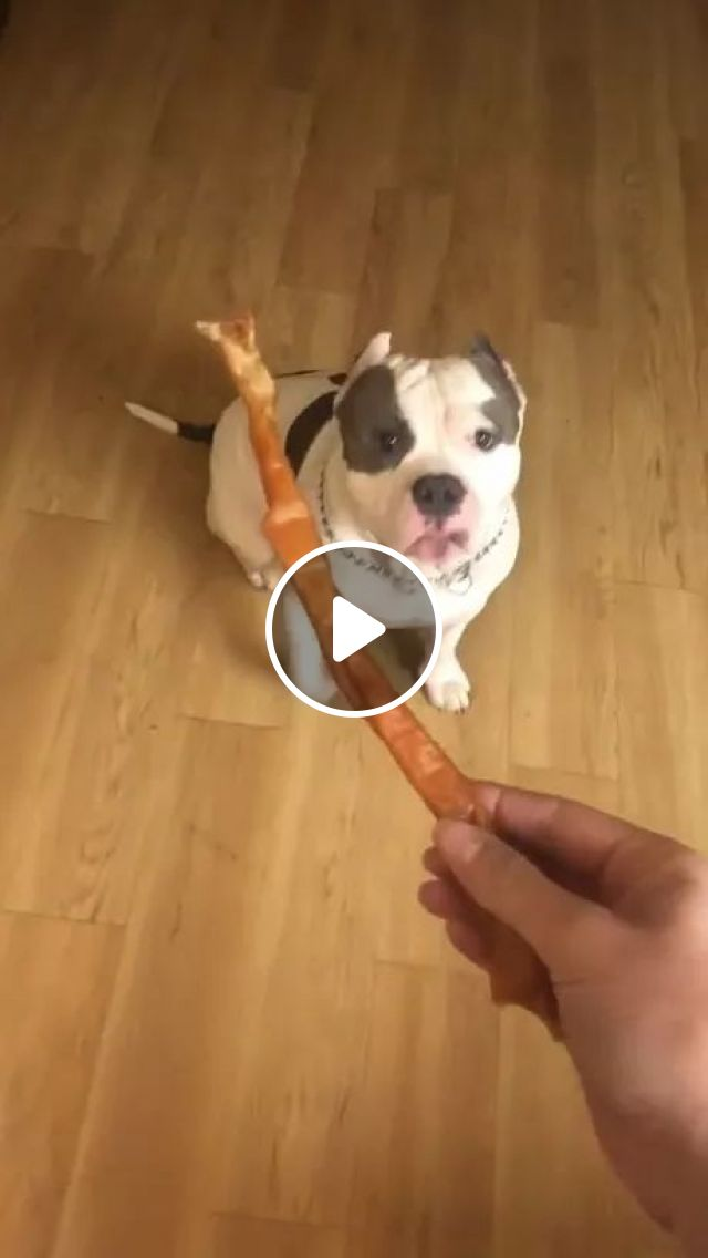 Another Brutus Happy Dance! - Video & GIFs   dog breeds, food animals, pet care, luxury apartments
