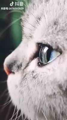 Lovely cat with beautiful and sad eyes