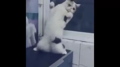 When there is music, cat dances to music