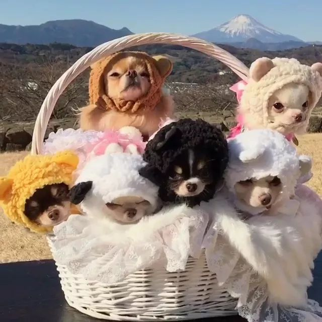 In mountains, lovely puppies in basket