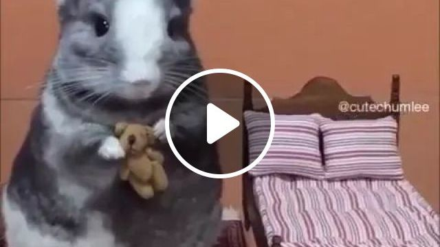 Lovely Mouse In Pet House - Video & GIFs | animal, mouse, adorable, cute, pet house