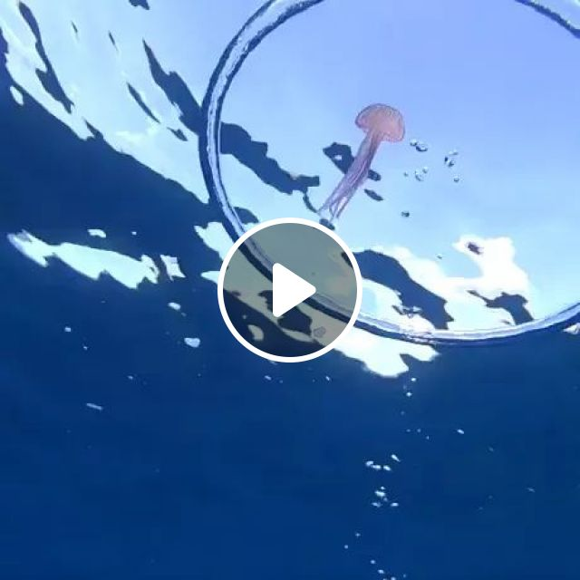 Jellyfish Vs Bubble Ring - Video & GIFs | Jellyfish, bubble ring, sea, ocean, nature, indonesia travel