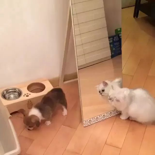 white cat loves to play with puppy in apartment