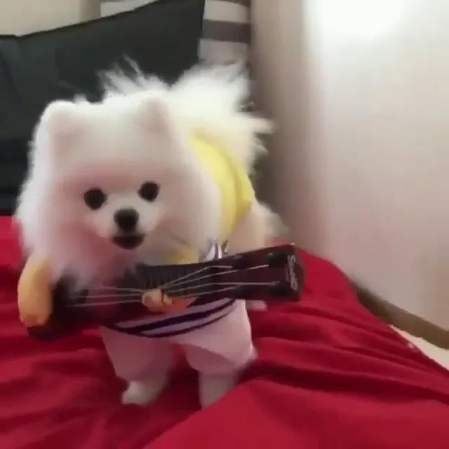 Talented dog performing guitar in bed